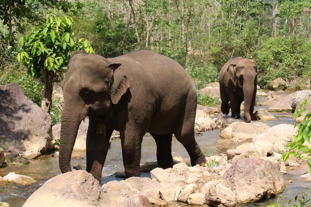 Green Hill Valley Elephant Camp Myanmar