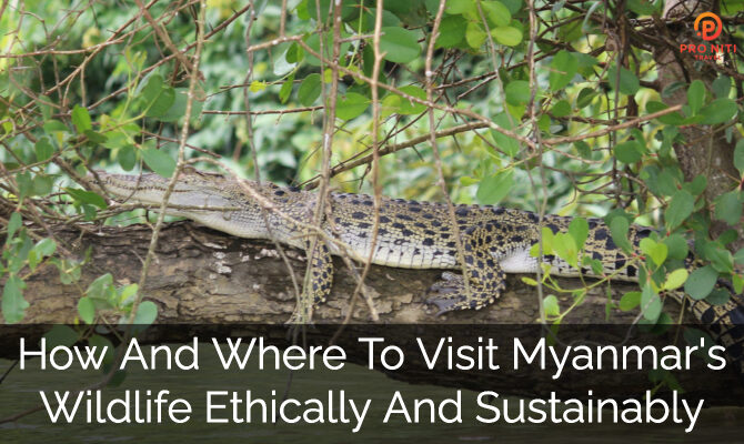 How and Where to Visit Myanmar's Wildlife Ethically and Sustainably